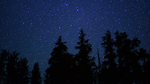 Ancient Forest Stars 06 Timelapse Dolly Bristlecone Pine Footage