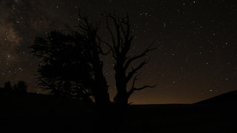 Perseid Meteor Shower Bristlecone Pine 06 Dolly In R Milky Way Time Lapse Footage
