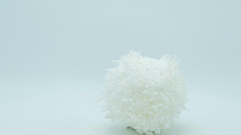 Christmas white fluffy ball rotating on white background Footage