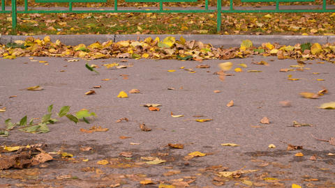 Side view of white car riding on road with yellow rolling leaves GIF