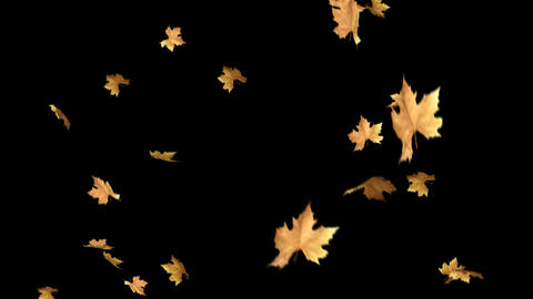 Autumn Leaves Falling With Alpha Channel Loop Clip. Can use this clip for GIF