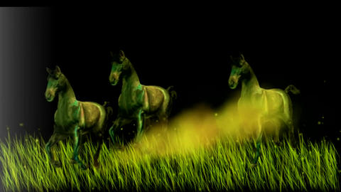 HERD OF WILD HORSEs at dawn Animation