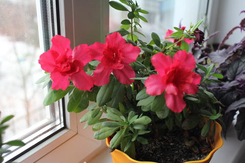 beauty in Nature close-up day Flower Arrangement head Pot Flowering plant Fotografía