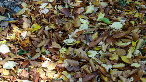 Fallen leaves on the ground. Colorful autumn fallen leaves GIF