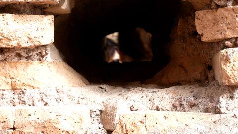 tracking shot on an ancient Roman wall with a hole in the middle, in the center ビデオ
