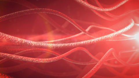 Neurons And Nervous System stock footage