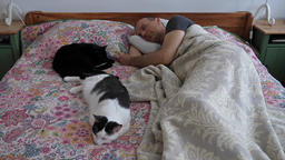 Afternoon nap. Man and his two cats are sleeping together Live Action