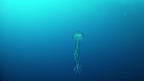 Underwater jelyfish - Diving in the Mediterranean sea GIF