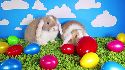 Easter bunny cute rabbit with eggs. Egg rabbits colorful background ビデオ