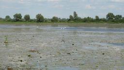 Birds reserve on Druzno Lake, Elblag, Poland Live Action