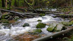 Wild nature. Mountain brook in a wild forest. Karkonoski National Park, Poland Footage