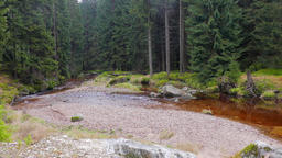 Wild nature. Mountain river in a wild forest. Karkonoski National Park, Poland Live Action