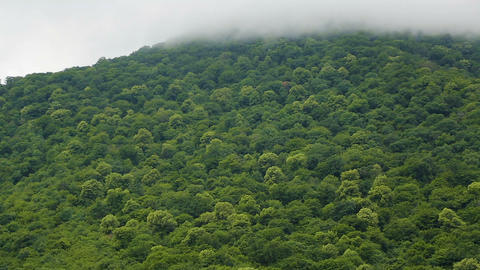 Soft clouds enveloping huge green hills saturating environment with oxygen Live Action