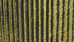 4k aerial vineyard GIF