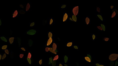 Falling Autumn Leaves Loopable Overlay Graphic Element V2 Animation