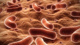 3D Medical Animation Pathogenic Bacteria Footage