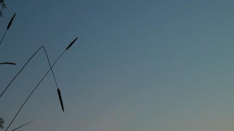A blade of grass on the background of the sky Stock Video Footage
