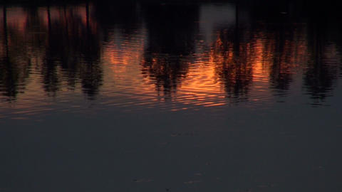 Reflection of trees in the water Footage