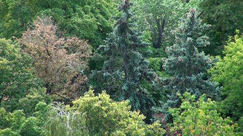 Green vegetation Stock Video Footage
