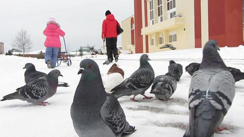 Pigeons 0