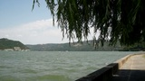 Danube River And Willow Tree With Wind Blowing Wildly stock footage