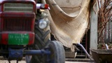 Old Tractor In Front Of A Pig House stock footage