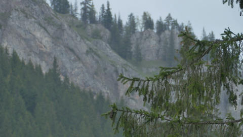 Branches of Fir and Mountains Footage