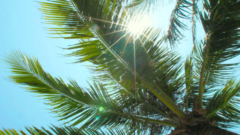 Sun shining through tropical palm leaves Footage
