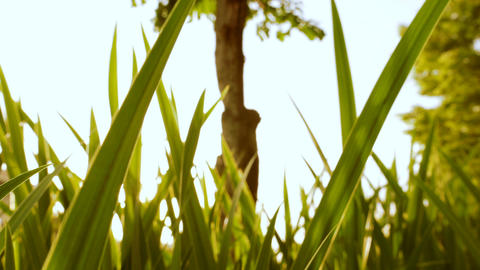 Grass Tree Wind Close Up Background stock footage
