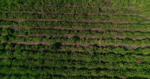 Fields Agriculture. Machinery. Drone Shot. 2