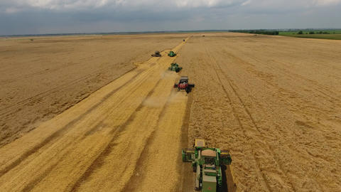 Harvesting wheat harvester. Agricultural machines harvest grain on the field Live Action