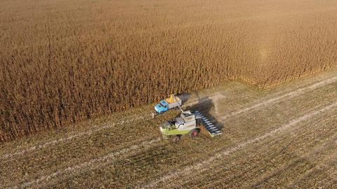 Harvester harvests corn Live Action