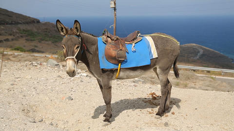 Equipped donkey standing on hill, domestic animal used as means of transport Footage