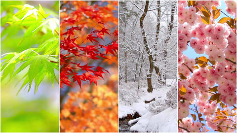 4 seasons nature collage. Several footage at different time of the year Footage