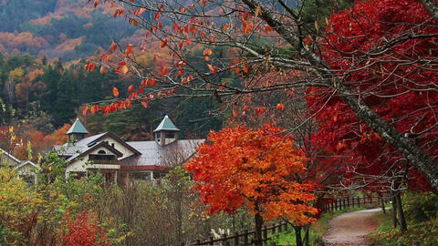 Hot Springs In Autumn stock footage