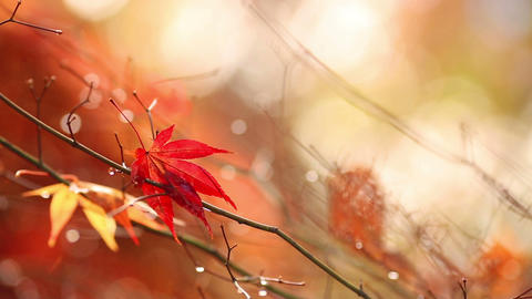 Autumn. Yellow blurred sunny background with colorful falling leaves. Slow motio Footage