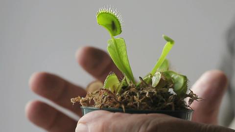 Venus flytrap plant Footage