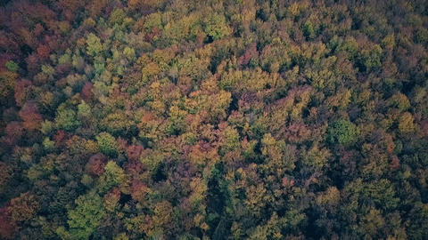 Flying above the stunning colorful treetops with turning leaves on sunny day Live Action