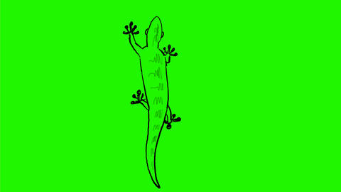 Lizard Crawling Drawing 2D Animation Animation
