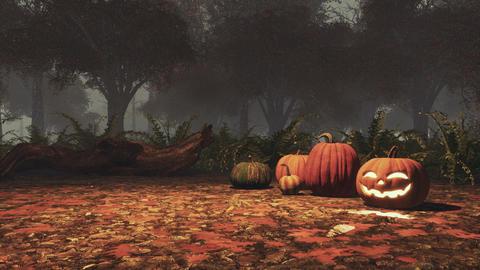 Halloween pumpkins in foggy autumn forest at dusk Footage