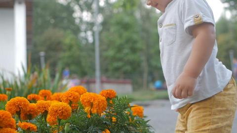 Little boy near the flower beds Live Action