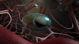 Animation Focus on Immunology of the lung Footage