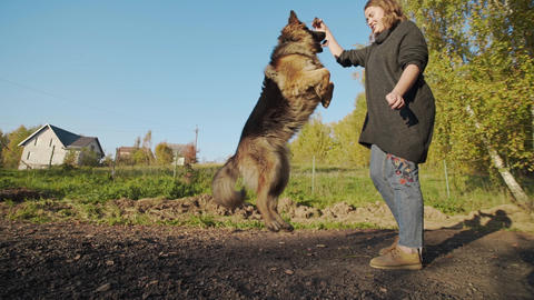 Young woman plays with big dog outdoors, shepherd dog jumps up outdoors, woman Live Action