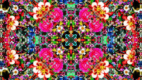 Psychedelic flower Kaleidoscopic loop animation CG動画素材