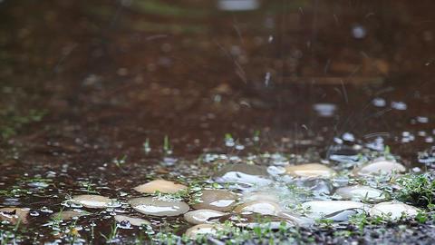 Rain on decorative stones Footage