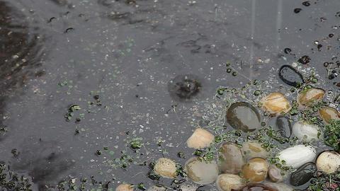 Rain on rocks and dichondra Footage