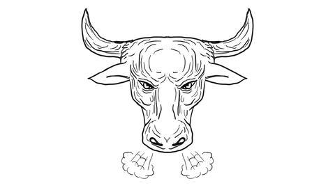 Texas Longhorn Bull Snorting Drawing 2D Animation Animation