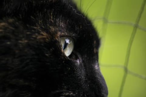 Black cat eyes Fotografía