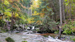 Stream of water in the wild forest at fall. Karkonosze National Park, Poland Live Action