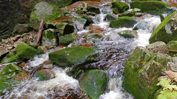 Beautiful mountain brook with a mossy rocks Live Action
